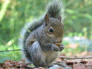 Well trained female female squirrel for salle